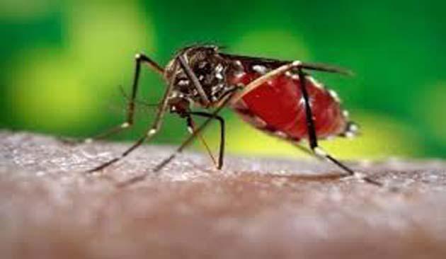 Dengue: 3 millones de casos notificados en América Latina