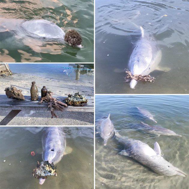Delfines: traen más regalos a los humanos en la cuarentena 0