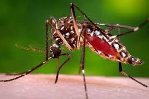 Los mosquitos encuentran objetivos humanos siguiendo el CO2 que exhalan 1