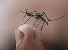 Los mosquitos: El olor a dióxido de carbono los alerta 0