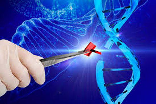 Embriones humanos: Científicos los alteran genéticamente 0