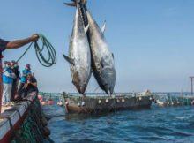 Metilmercurio: Los niveles de los océanos está empeorando 0