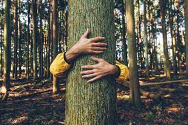 Entre árboles: los árboles parlantes existen no es ficción 0