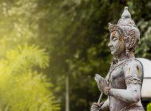 Albahaca sagrada: tiene muchas propiedades terapéuticas 0
