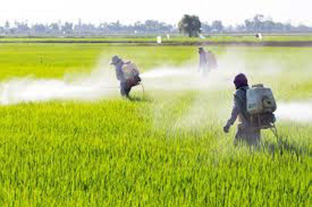 Pesticidas en los alimentos: 6000 millones de libras por año