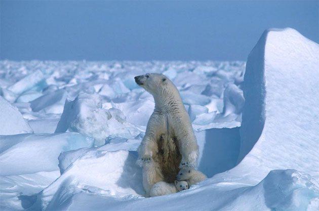 Récord de temperatura más fría de todos los tiempos 0