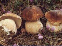 Cáncer de próstata: Agregar hongos a su dieta lo reduce 0