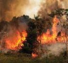 Incendios forestales: están dañando la calidad del aire 0