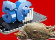 Scientific American: los peligros de la tecnología 5G