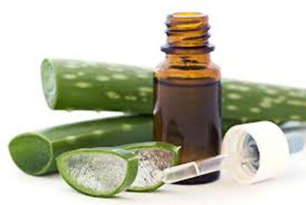 Planta popular: aloe vera tiene propiedades antivirales 0