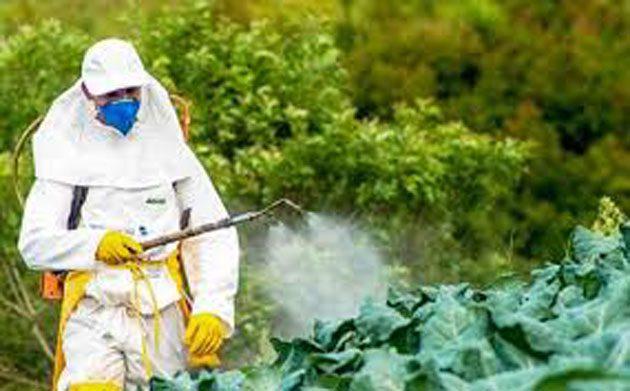 Neonicotinoides: tierras 48 veces más tóxicas para insectos
