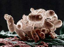 Bacterias del suelo: componentes esenciales del ecosistema 0