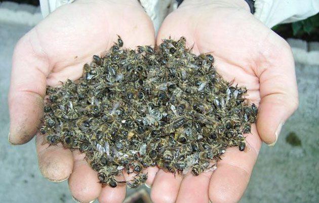 Los neonicotinoides: utilizados en la producción agrícola 0