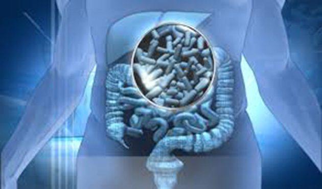 Probióticos: reducía los niveles de ácido úrico 0