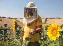 Insecticidas: medir fácilmente los pesticidas en la miel 0