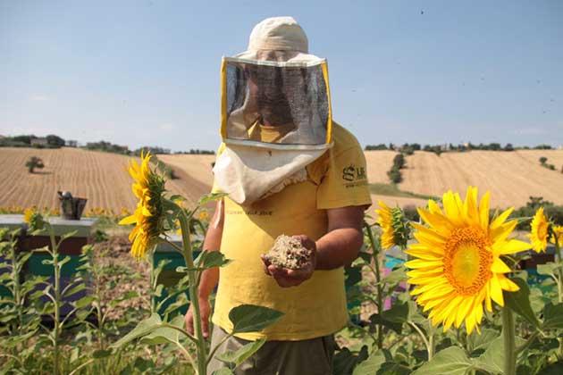 00  Insecticidas: medir los pesticidas en la miel  00
