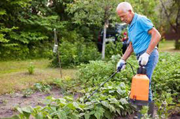 00  Nitrógeno para plantas: insecticida como nicotina  00