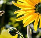 Neonics: insecticida que se asemeja a la nicotina 0