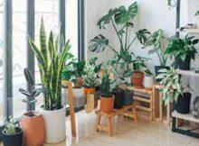 Purificar el aire: a través de las plantas de interior 00