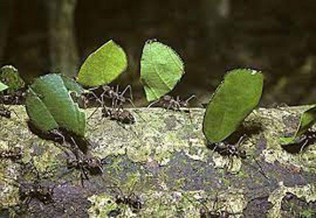 00  Hormigas de jardín: protegen a las plantas  00