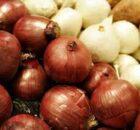 00 Cebollas blancas: plantas medicinales comestibles 00
