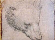 00 Cabeza de oso de da Vinci se subastará en julio 00