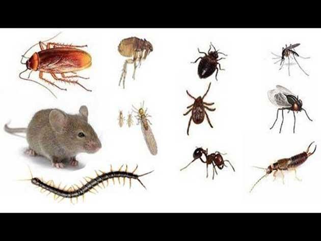 00 control de plagas en su hogar, remedios naturales 00