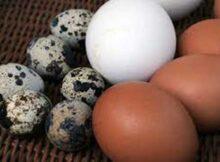 00 Huevos frescos: seis técnicas de conservación 00