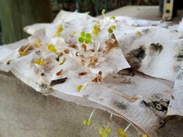 00 Papel con semillas para su jardín de supervivencia 00