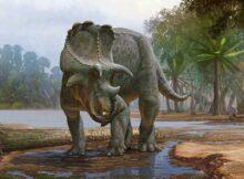 00 Fósil dinosaurio: despedido por descubrimento 00