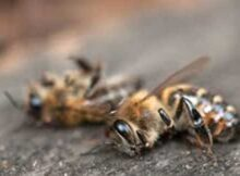 00 Pesticidas y herbicidas peligrosos para las abejas 00