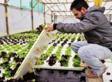 00 Hidroponía: es el cultivo de plantas en nutrientes 00