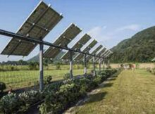 00 Paneles solares: encontró como cultivar frutas 00