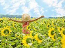 00 Girasoles como cultivarlos como alimento y medicina 00