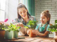00 Jardinería doméstica: Cultivo verduras en interiores 00