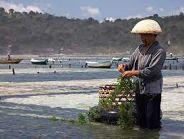 00 Algas marinas y ostras: las granjas acuícolas 00